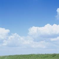 綿雲流れる初夏の土手