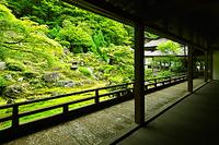 京都府 京都市  常照皇寺  庭園