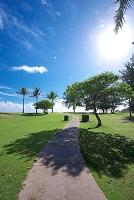 ハワイ ヤシの木と道