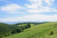 青空とビート畑
