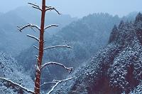 千葉県 深山の雪