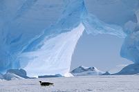 南極 氷の上を滑るコウテイペンギンと氷山