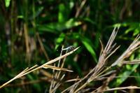 四季彩 野辺の生き物 蜻蛉