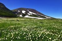 北海道 東川町 大雪山系 裾合平のチングルマ群生と旭岳