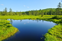 朝の浮島湿原