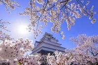 福島県 桜咲く鶴ヶ城