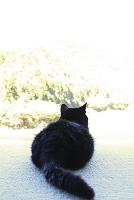 和歌山の猫
