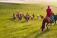 モンゴル 草原の馬