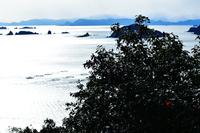 寒椿咲く頃 港町 錦から東紀州遠望
