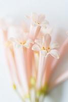 花アレンジ