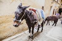モロッコ フェズ フェズ・エル・バリ ロバ