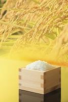 ミニ升に盛られた米粒と稲穂