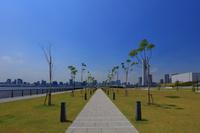 東京都 豊洲ぐるり公園 東京湾