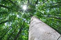 新潟県 新緑の森