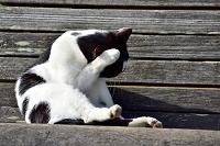 猫のしぐさ 顔を洗う