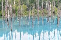 北海道 美瑛 青い池