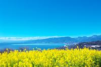 神奈川県 箱根の山並みと菜の花
