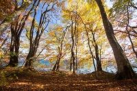 秋田県 落ち葉の森・秋の十和田湖畔