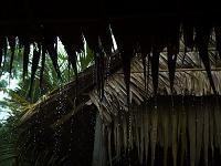 ベトナム カントー近郊の村のスコール