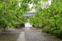 京都府 光明寺 新緑の表参道と総門