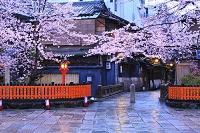京都府 早朝の祇園白川の桜と巽橋