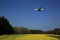 菜の花畑を飛ぶボーイング767 デルタ航空