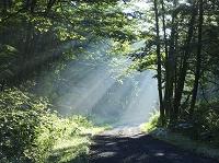 北海道 朝の道と斜光