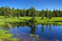 北海道 浮島湿原