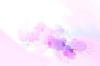 複数のピンク胡蝶蘭
