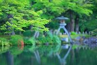 石川県 初夏の兼六園