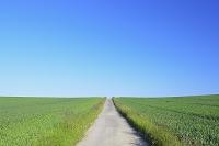 ドイツ ヘッセン州 1本の道