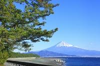 静岡県 富士山と三保の松原