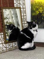 鏡の前に座る猫