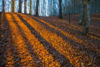 イタリア トスカーナと秋