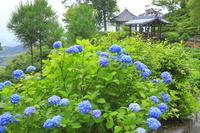 京都府 アジサイの咲く善峯寺