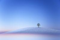 韓国 平昌郡 雪の丘の一本の木