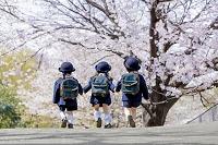 桜の咲く公園を歩く新入園児の後ろ姿