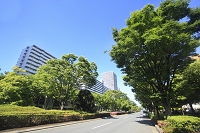 東京都 光が丘駅前並木道