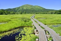 群馬県 上田代の池塘と至仏山
