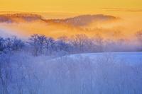 北海道 霧氷の木立朝景 釧路川