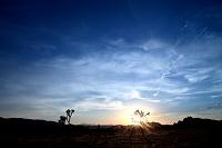 アメリカ合衆国 カリフォルニア州 ジョシュアツリー国立公園
