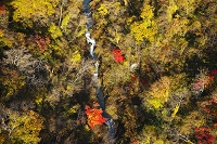 登別川の紅葉