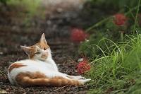 愛知県 津島の猫