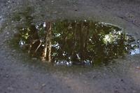 埼玉県 水たまり