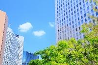 東京都 新宿 新緑と超高層ビル群