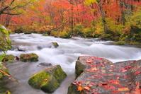 青森県 秋の奥入瀬渓谷