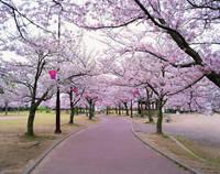 愛知県 明石公園