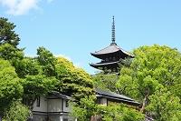 奈良県 興福寺 猿沢池から見る新緑の五重塔
