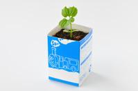 ツルレイシ 牛乳パックを利用した育苗の様子 3/7 子葉と本葉