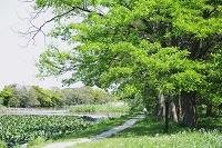 東京都 水元公園